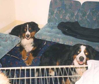 Laivalla 1997 Viljo ja Niilo