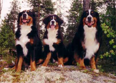 Vera, Kerttu ja Venla